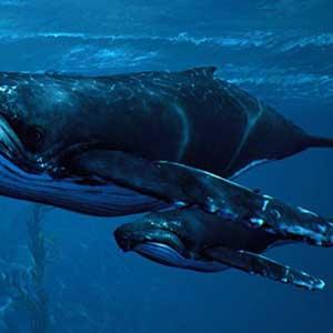 de open oceaan bevaren