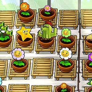 Grow your own Zen Garden